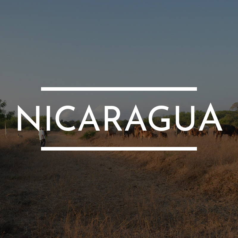 """NICARAGUA"" is written on top of an image of Several cows graze in a field"