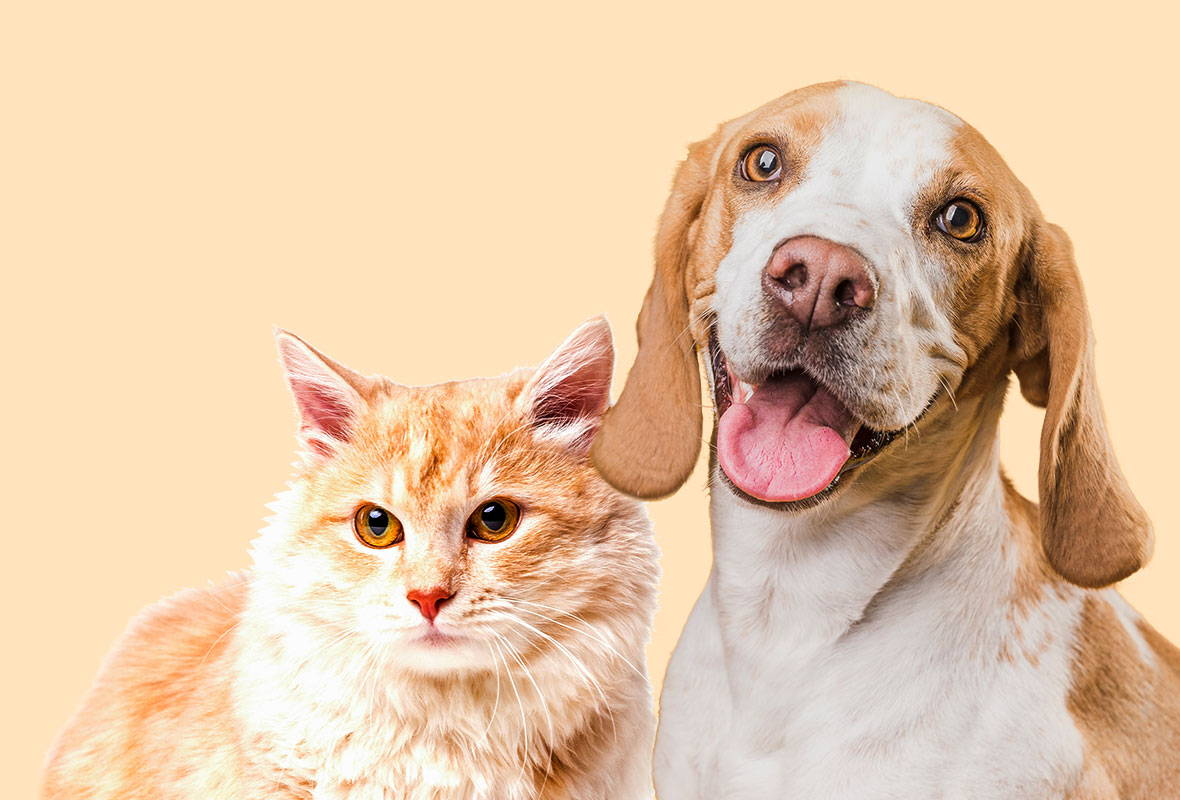 Pets, Cats & Dogs & Everything You Need