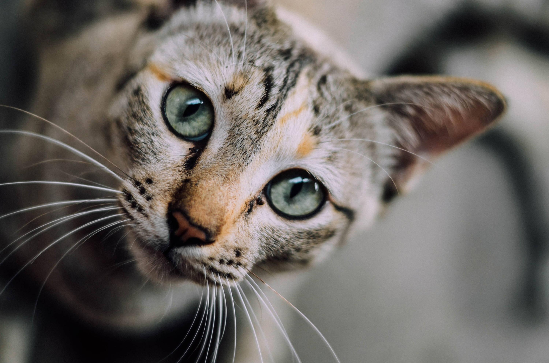 Gone but Never Forgotten: 10 Meaningful Cat Memorial Ideas – petventuresbook