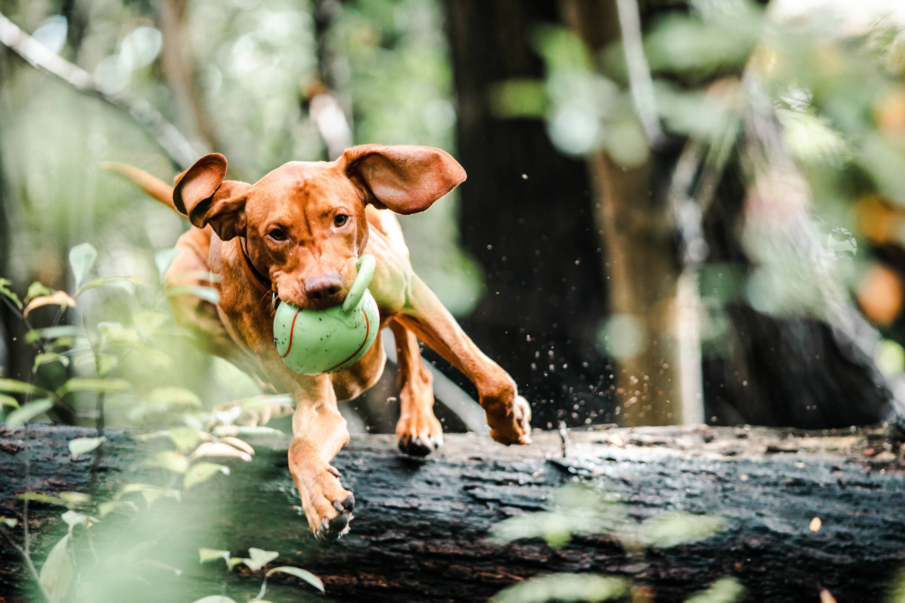 5 Important Exercises To Get Fit With Your Dog - Team K9