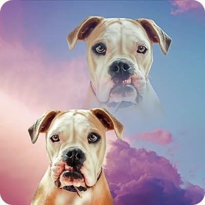 pop your pup super portrait collection