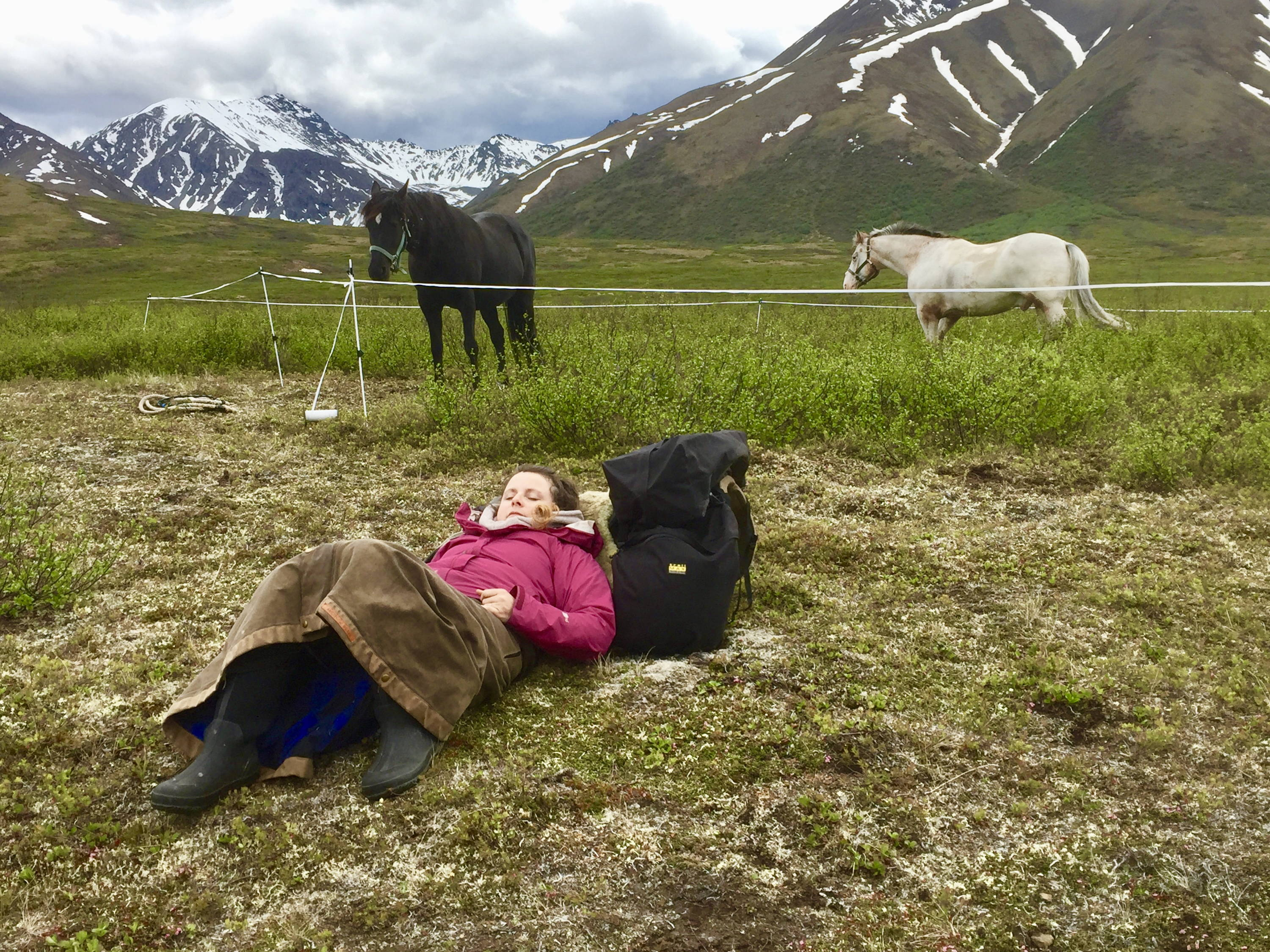 Arctic Horse horse trekking trail riding denali alaska windy creek camping with horses backcountry trail skirt