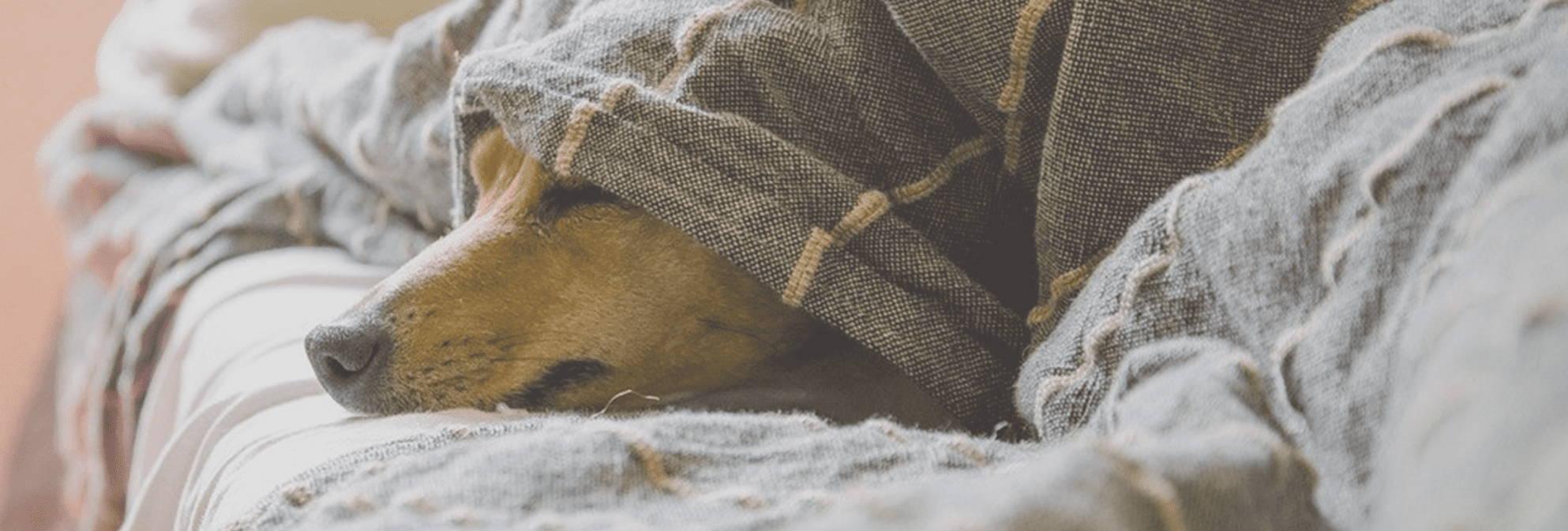 anxiete-stress-chez-le-chien-solution