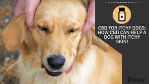 CBD For Itchy Dogs: How CBD Can Help A Dog With Itchy Skin