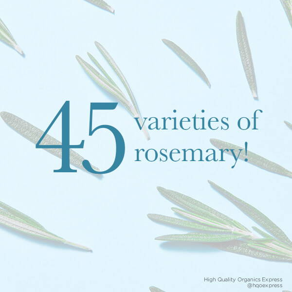High Quality Organics Express there are 45 kinds of rosemary on blue background with leaves