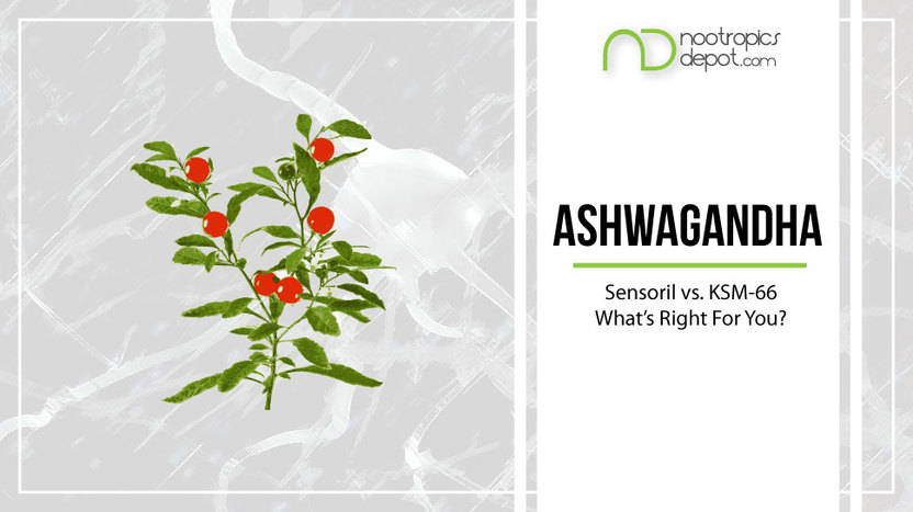 Ashwagandha: KSM-66 vs. Sensoril