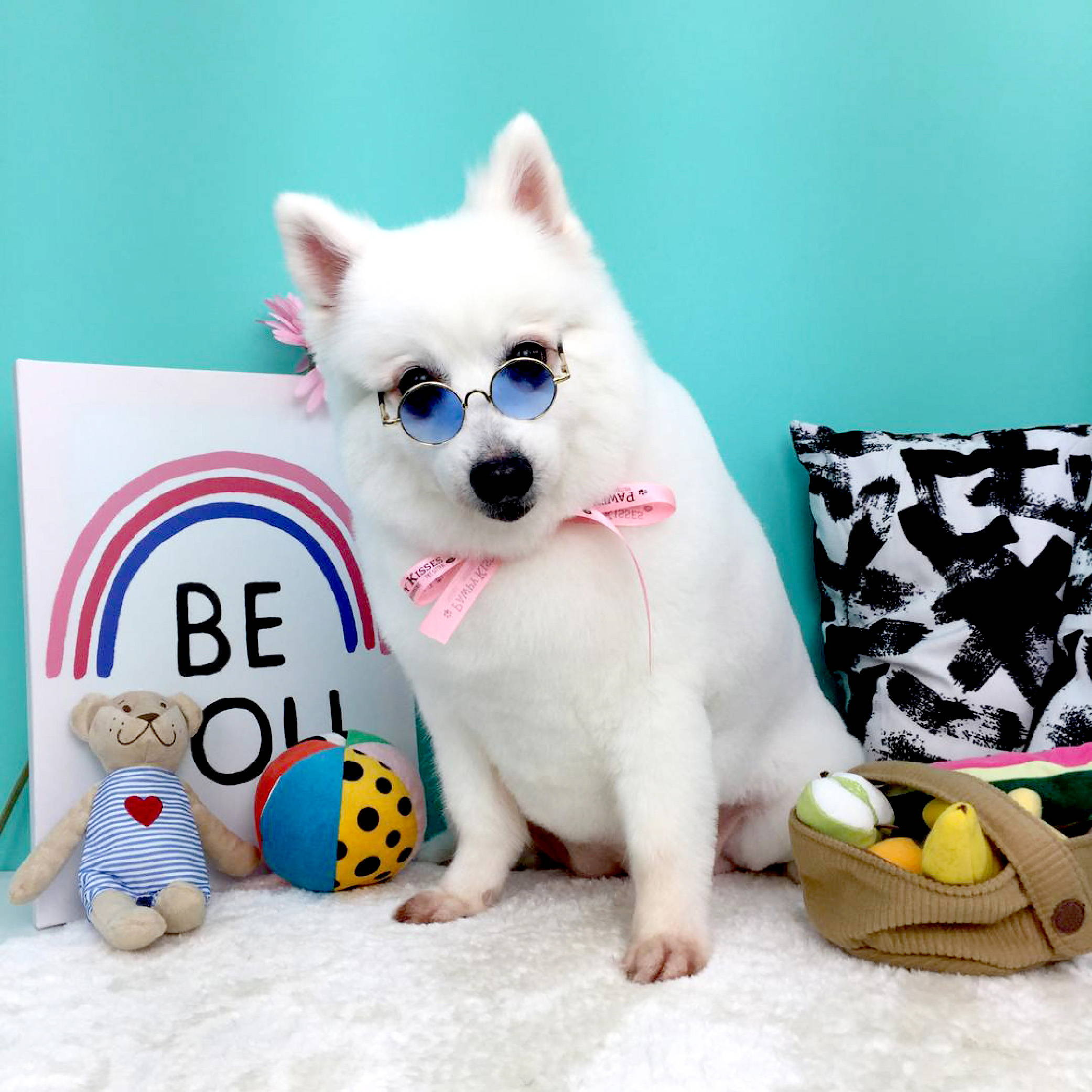 Pawpykisses pet grooming singapore 7