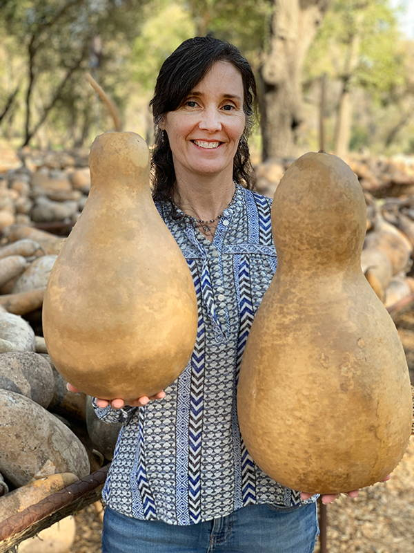 Large Tall-Body Gourds Range in Size from 9
