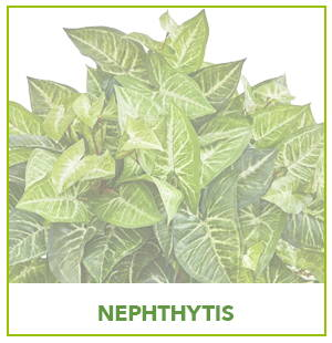 ARTIFICIAL NEPHTHYTIS PLANTS