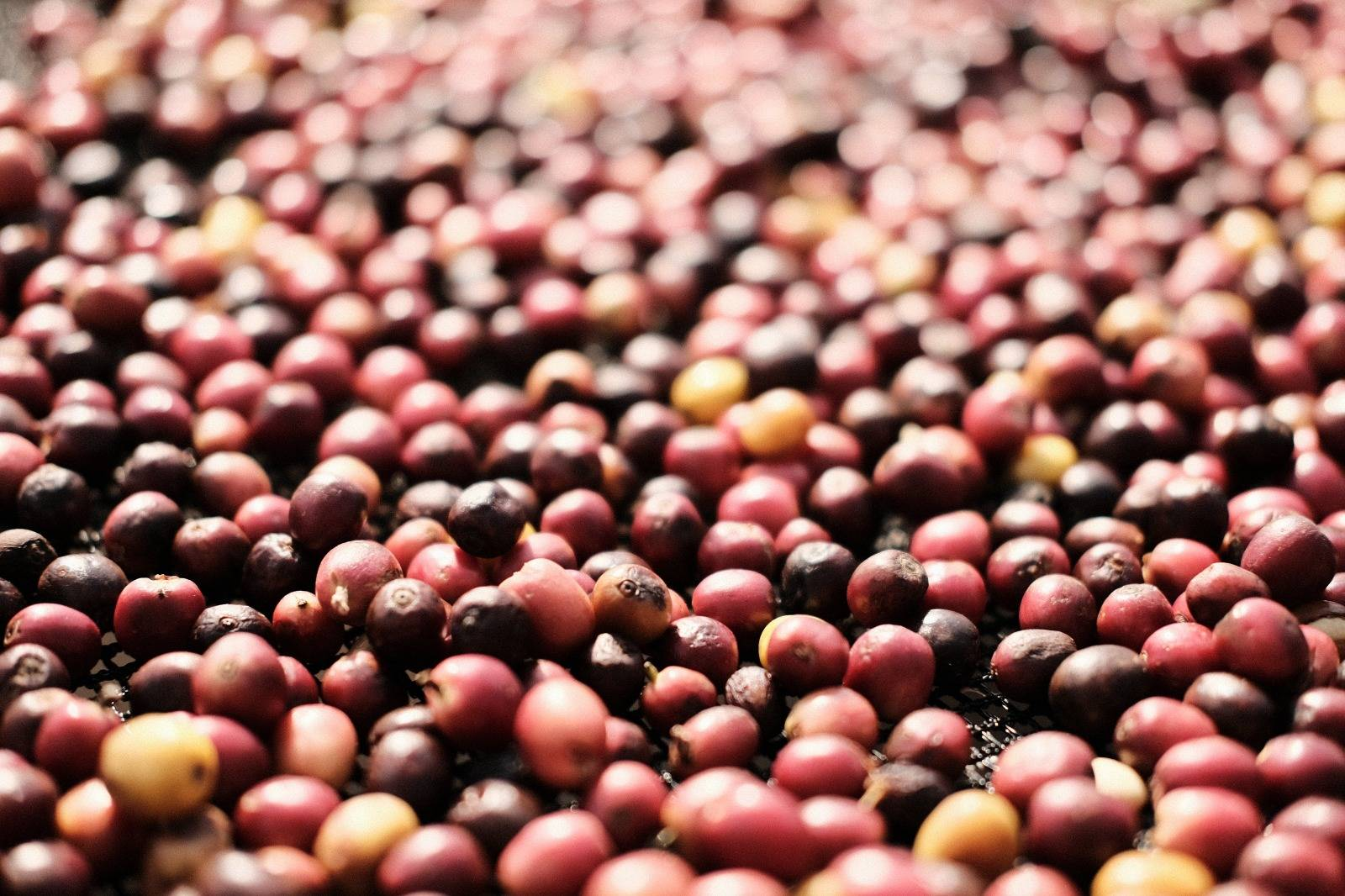 ethically sourced coffee beans
