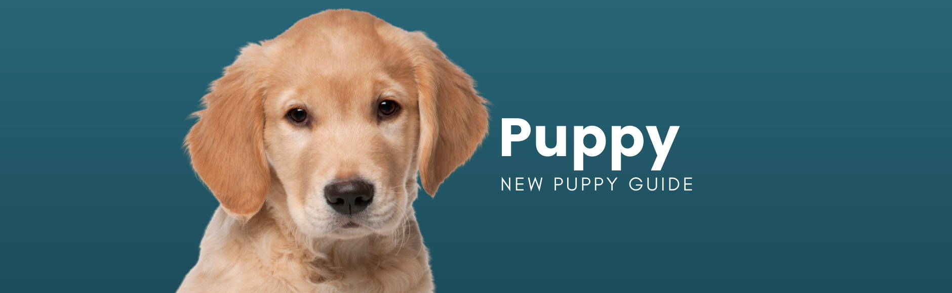 Puppy - New Puppy Guide