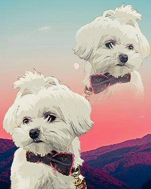 super imposed maltese