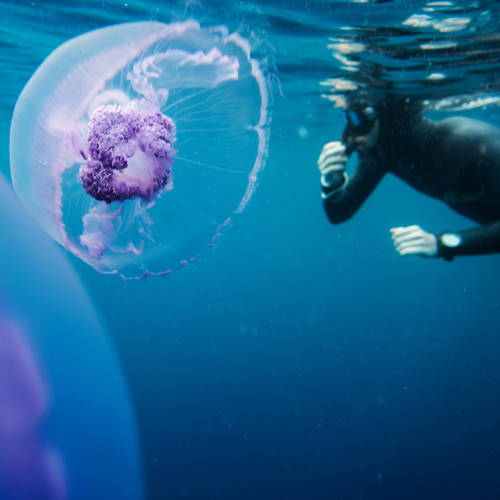 Jellyfish With Surfer