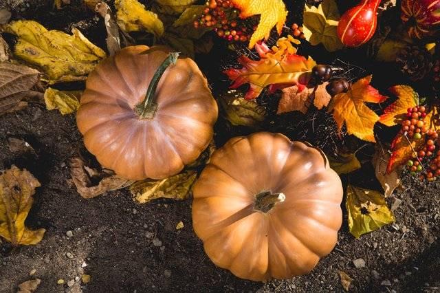 Pumpkin Spice Blend Oil Blend | Mukha Yoga