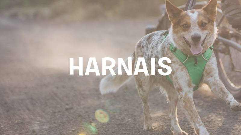 inooko-harnais-original-chien