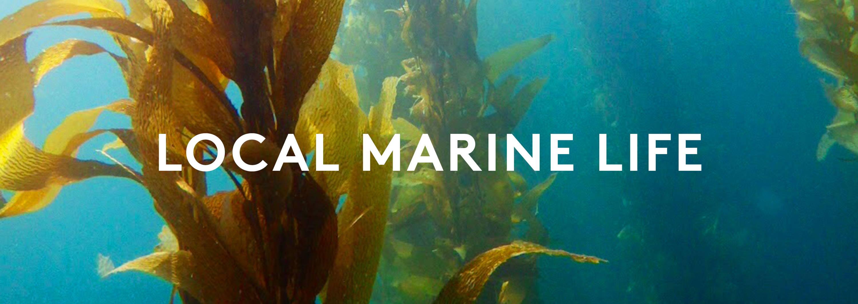 La Jolla Marine Life