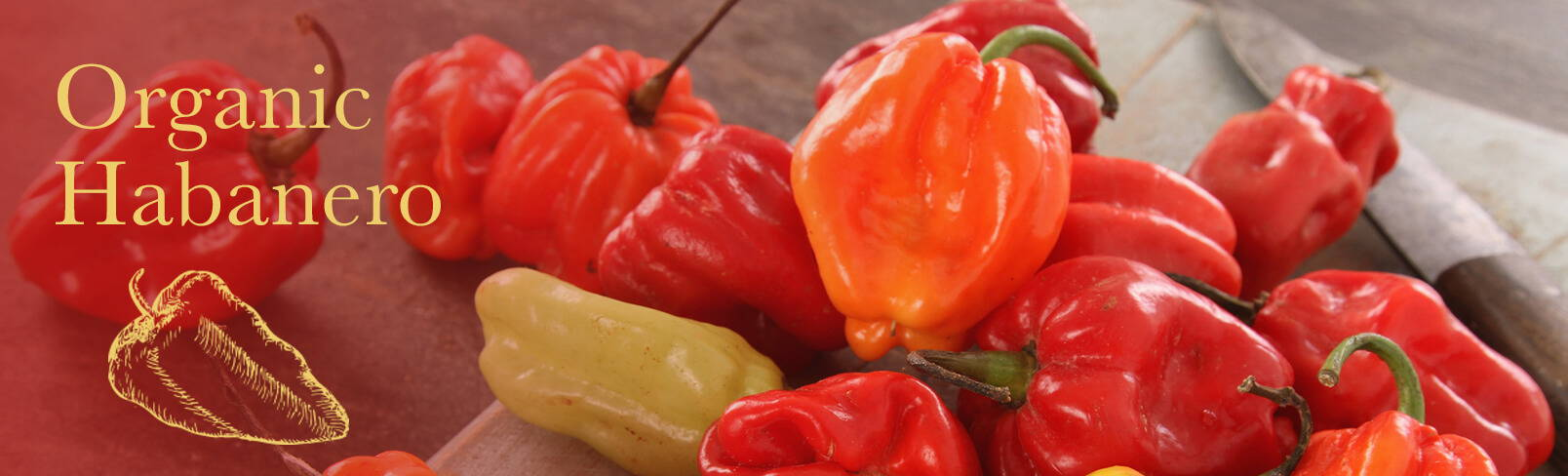 High Quality Organics Express Habanero Peppers