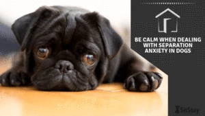 Be Calm When Dealing With Dogs With Separation Anxiety