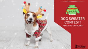 Dog Sweater Contest