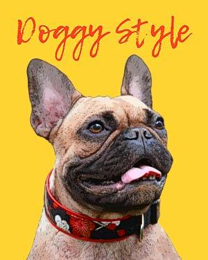 french bulldog doggy style