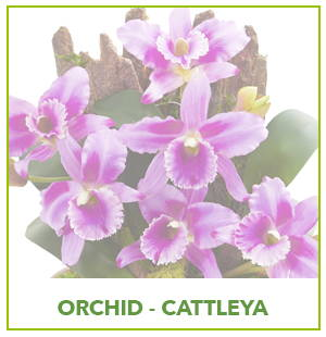 ARTIFICIAL CATTLEYA  ORCHID PLANTS