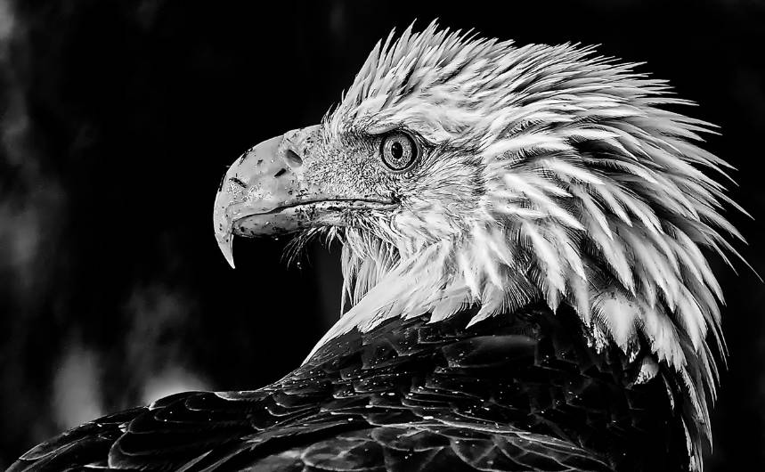 American Bald Eagle Wildlife photography tour and expeditions