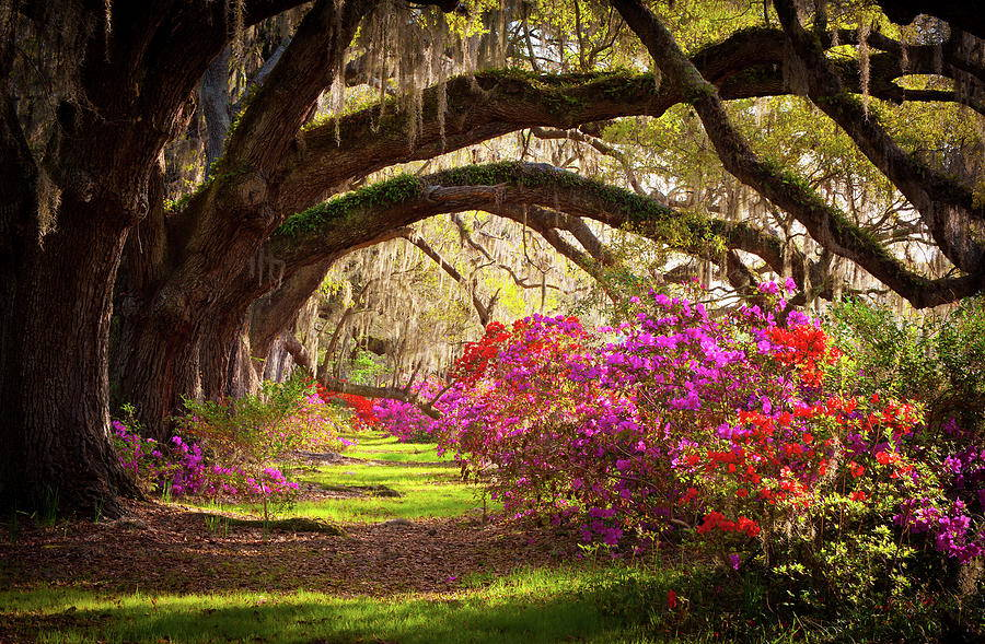 Propose at Magnolia Plantation, South Carolina