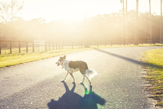 7 Important Tips For Keeping Your Dog Safe From Traffic - Team K9