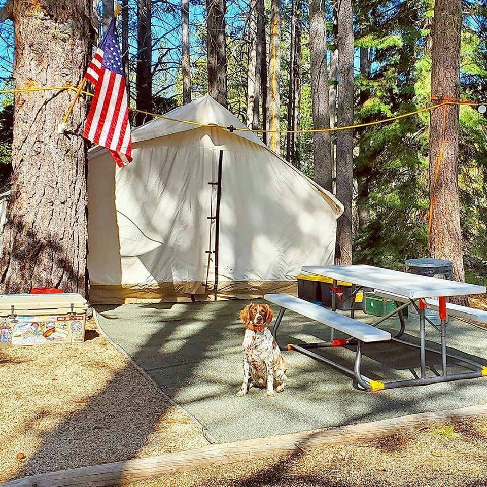 canvas wall tent cotton canvas dog outdoors usa
