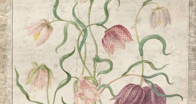 Die Geschichte der Tulpen