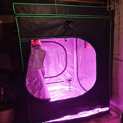 A grow tent set up inside of a basement in a home.