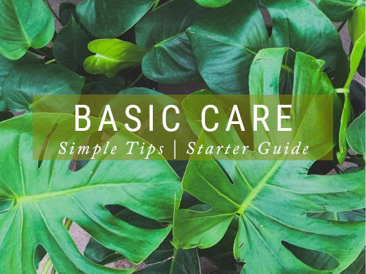 Houseplants Basic Care