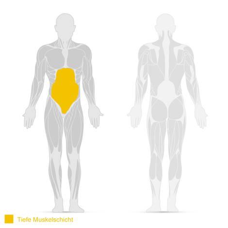 Darstellung des Queren Bauchmuskels