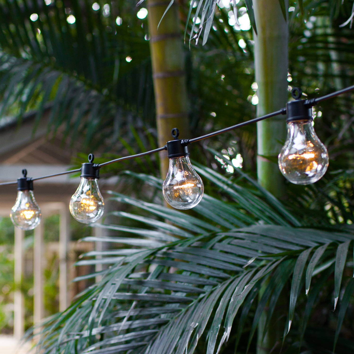 Green palm trees with a string of festoon lights on black cable
