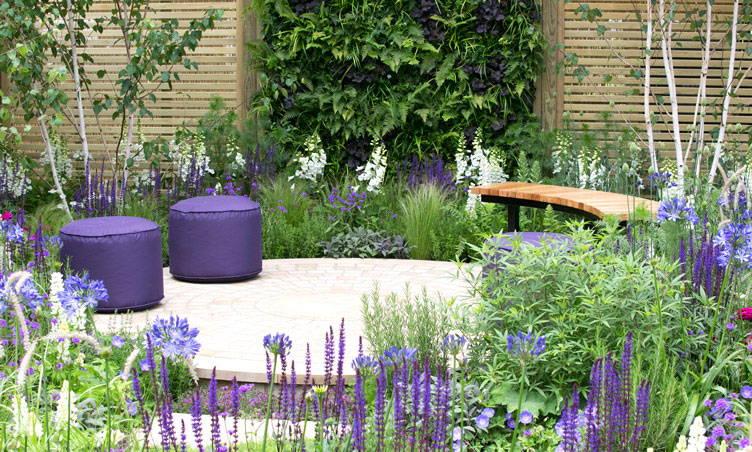 Le violet au jardin