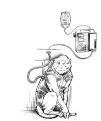 Primate Tethered Infusion System