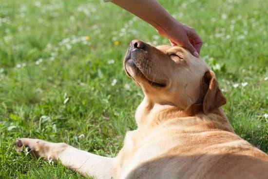 A tan dog looks up while it's being petted while laying on green grass