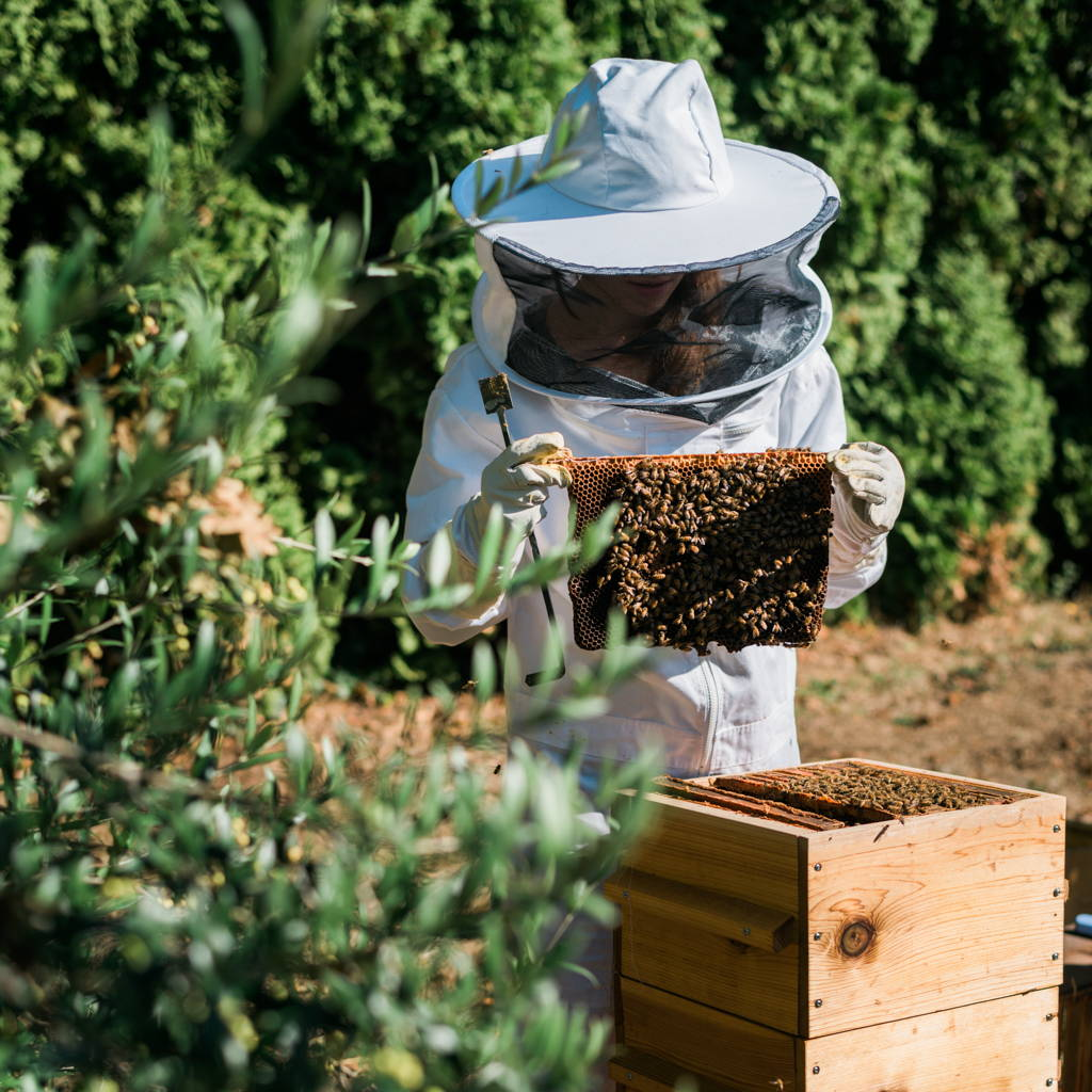 A beekeeper with a Warre hive and honeybees.