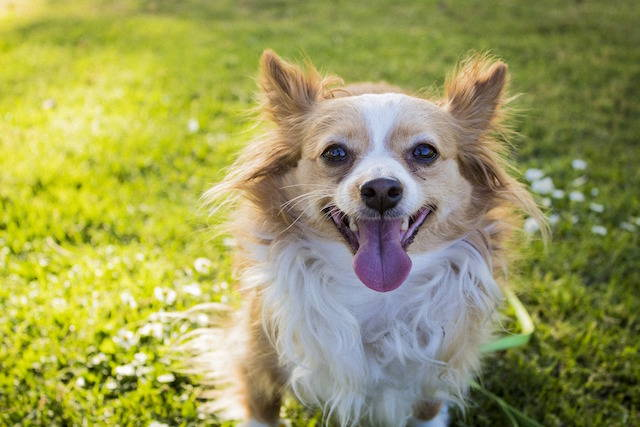 Metronidazole for Dogs: What You Need to Know