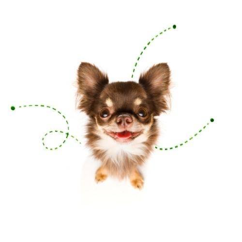 Bone Idol Guide Dog Fleas