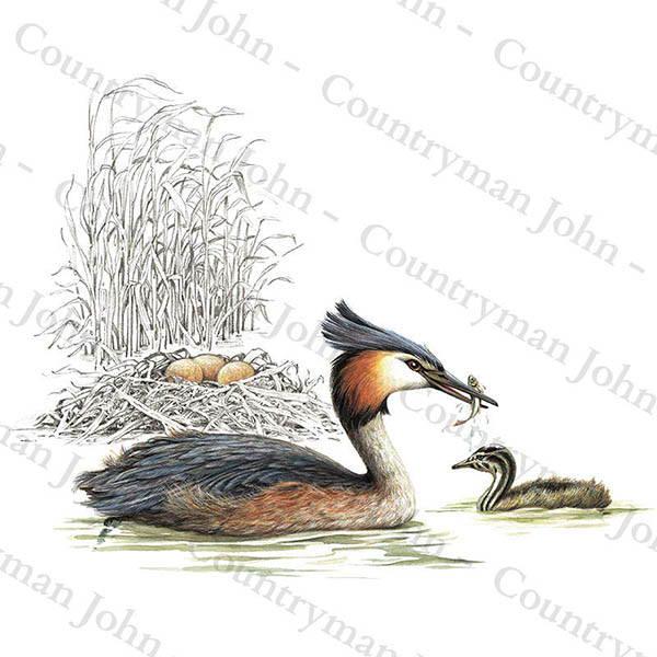 Countryman John Grebe and Nest Artwork - 702