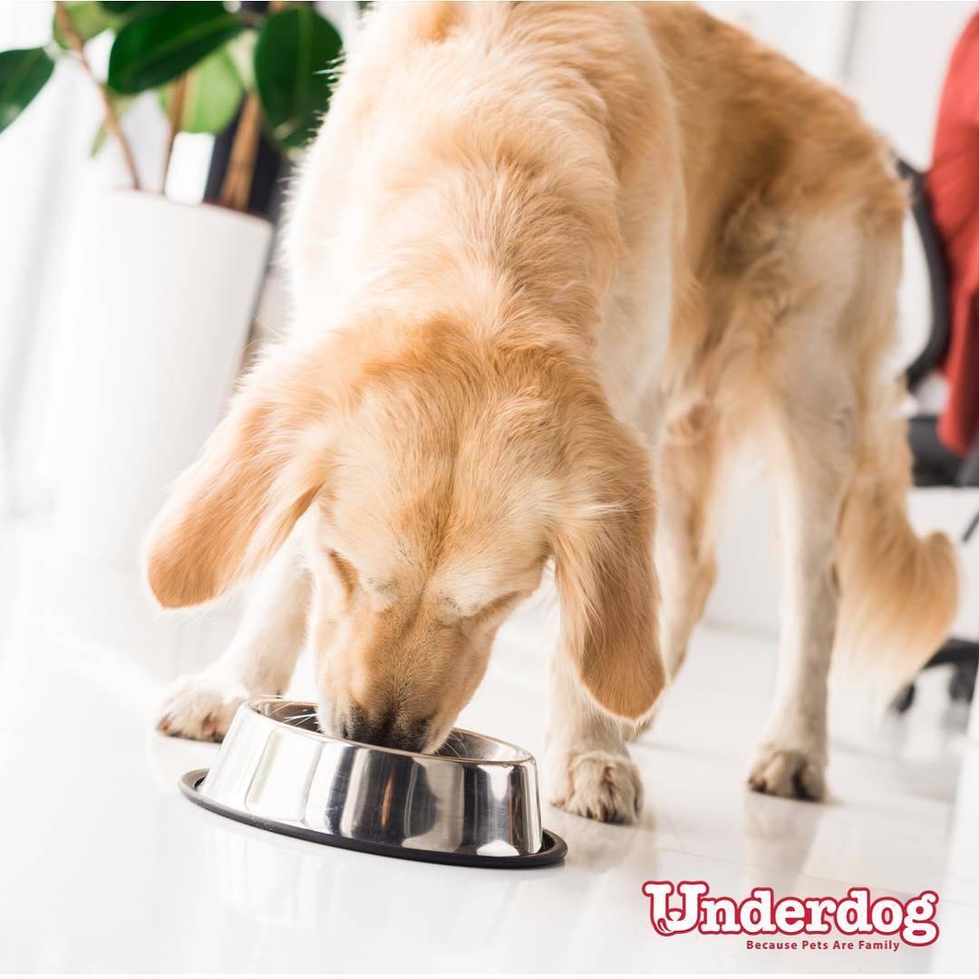 pawpy kisses underdog fresh dog food in singapore feeding guide