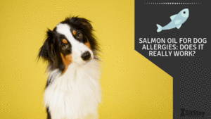 Salmon Oil For Dogs Allergies: Does it really work