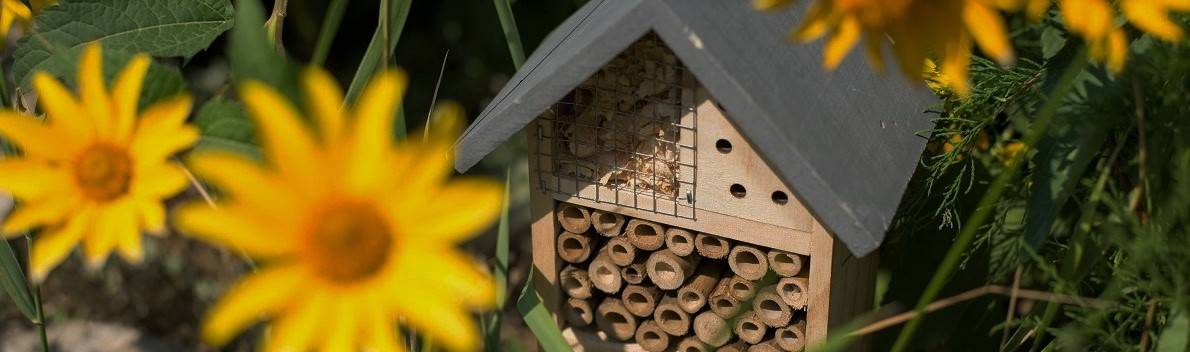A bug box set among yellow flowers. Installing a bug box is a first easy step to rewild your garden.