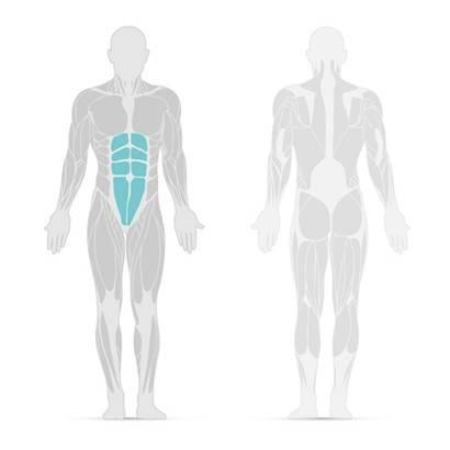 Darstellung des Geraden Bauchmuskels, der für das Sixpack sorgt