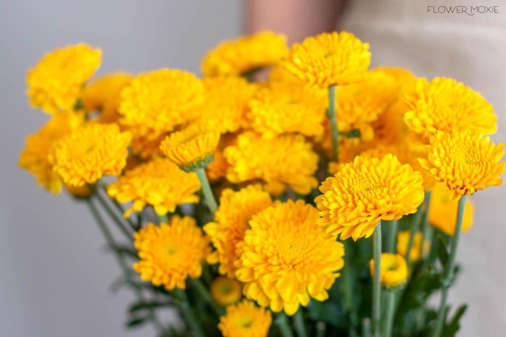 Yellow Button Pom Flower