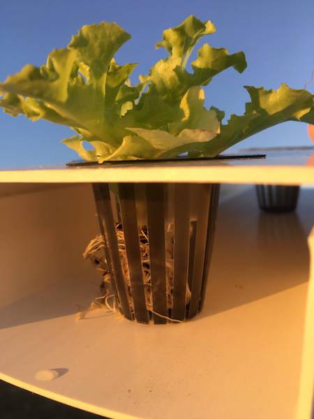Seedling Baskets