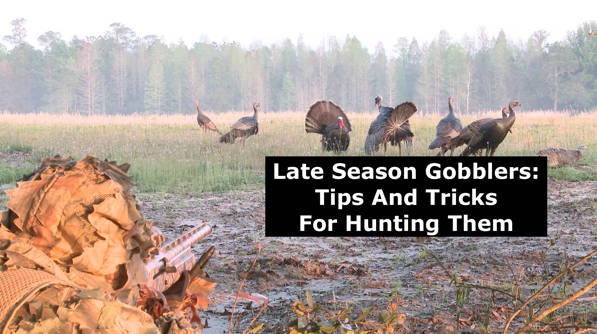 Late Season Gobblers: Tips and Tricks