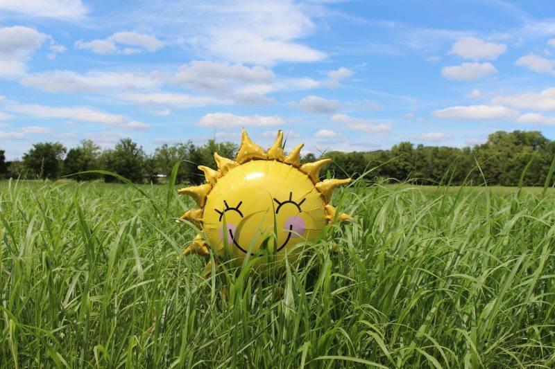 Sun Balloon In The Grass