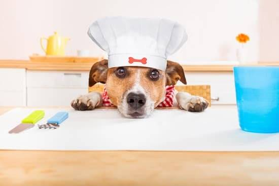A tan dog wearing a chef hat, resting his head on the counter